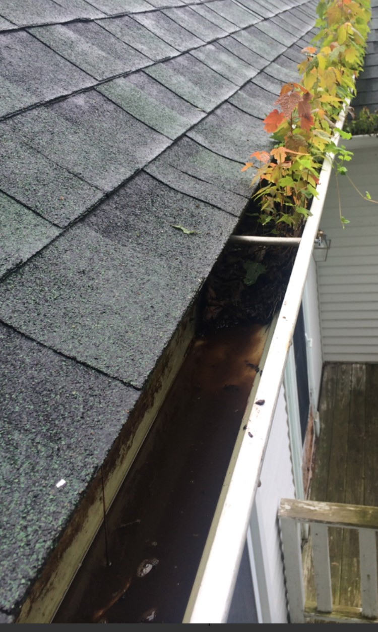 Gutter Cleaning Professional Gutter Cleaners La Jolla